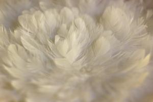 Bio-Daunendecken kaufen, Schlafstudio Freising